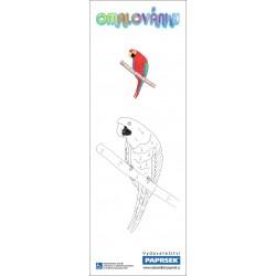 Omalovánky PAPRSEK® - záložka - papoušek, motýl