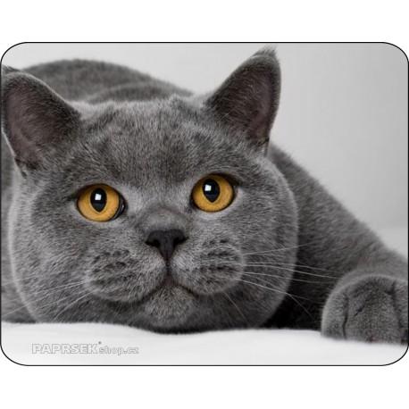 Podložka pod myš 190 x 240 mm - kočka
